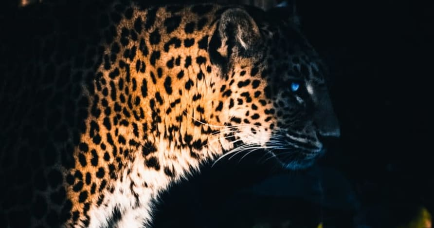 Yggdrasil Partners ReelPlay atbrīvo Jaguar SuperWays no Bad Dingo